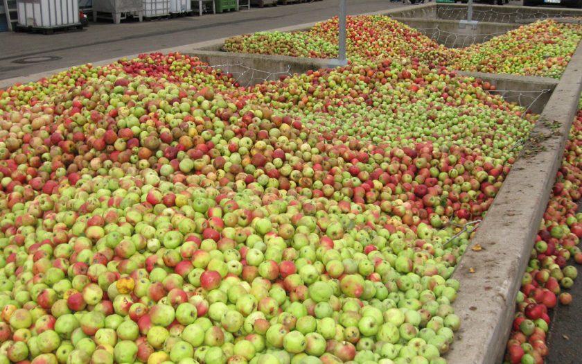 sehr viele Äpfel