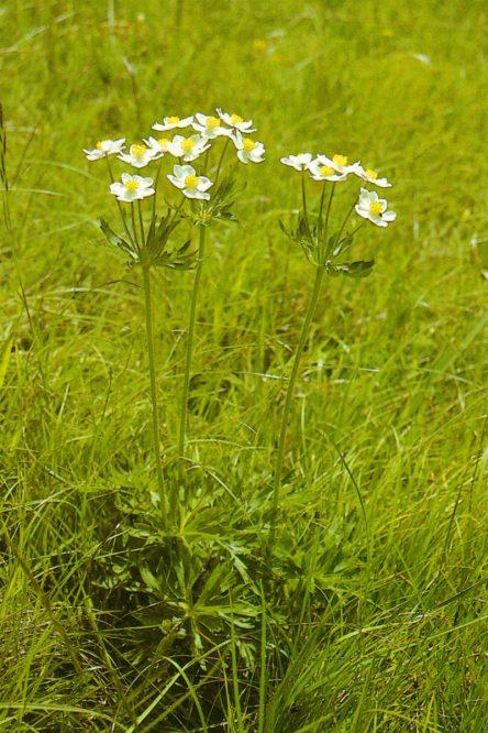 weißblühende Pflanze