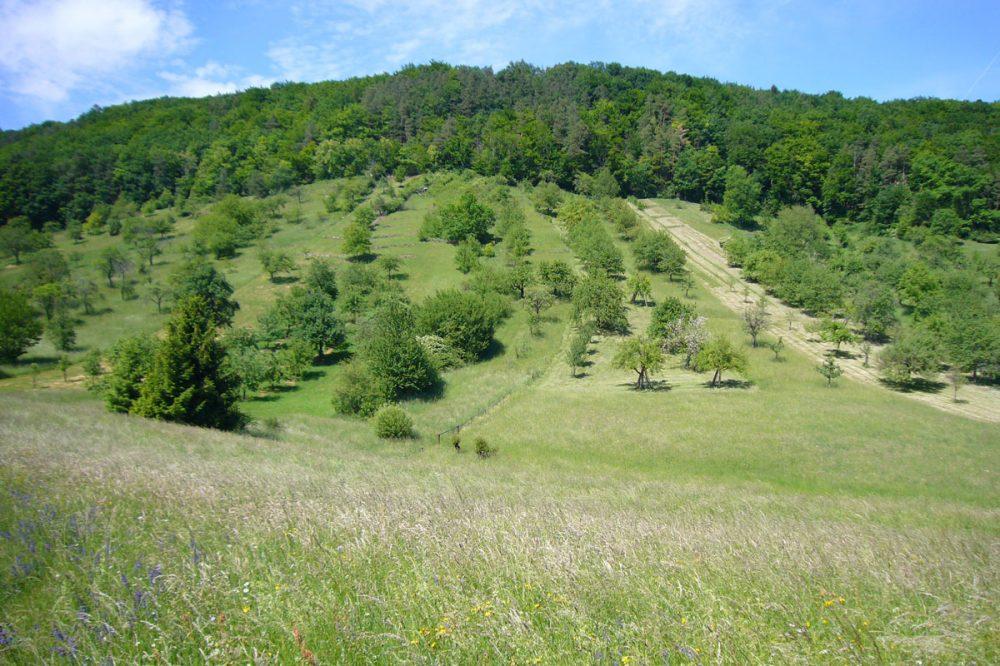 Landschaft mit Wald und Obstwiesen
