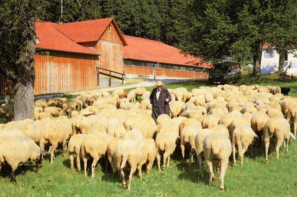 Schafherde vor einem Gebäude