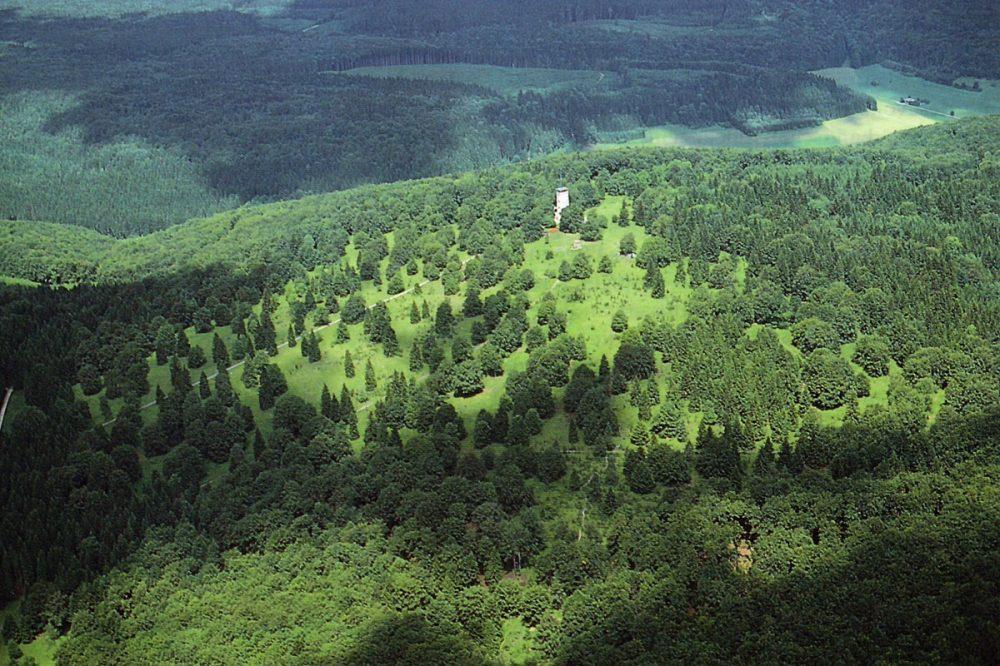 Luftaufnahme eines Waldes