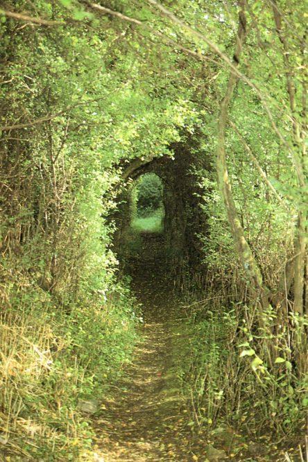 Hohlweg in einem Wald