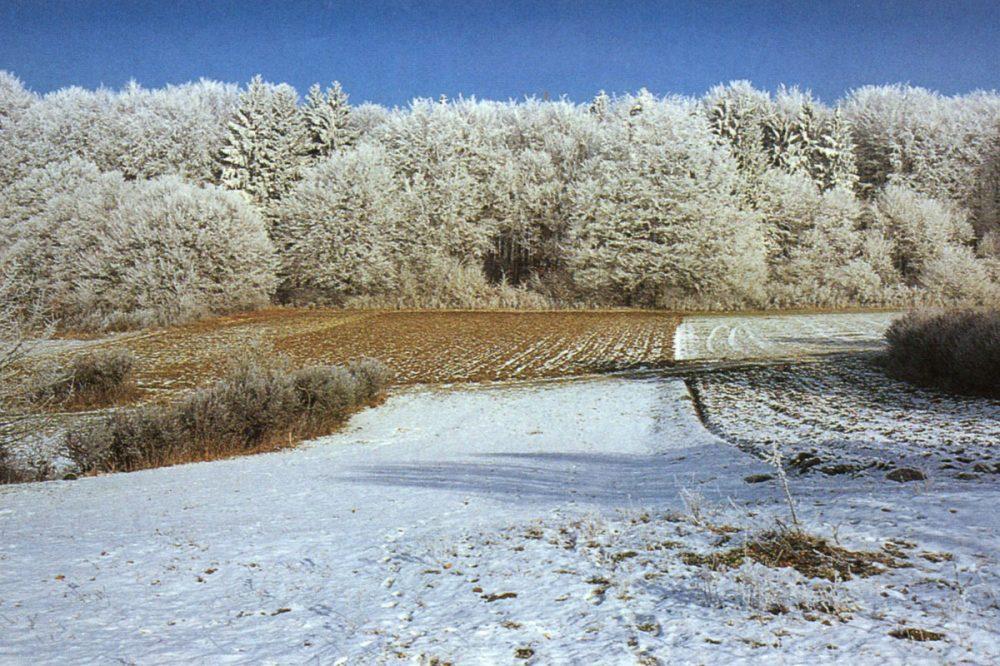 Felder und Waldrand im Winter