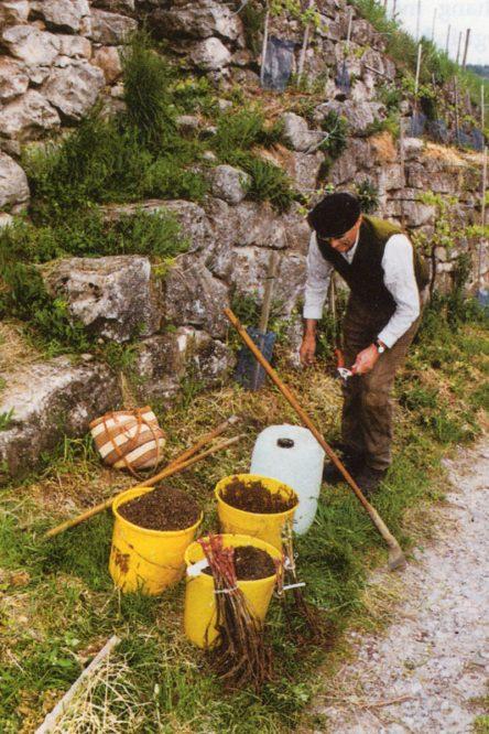 eine Person arbeitet an einer Weinbergmauer
