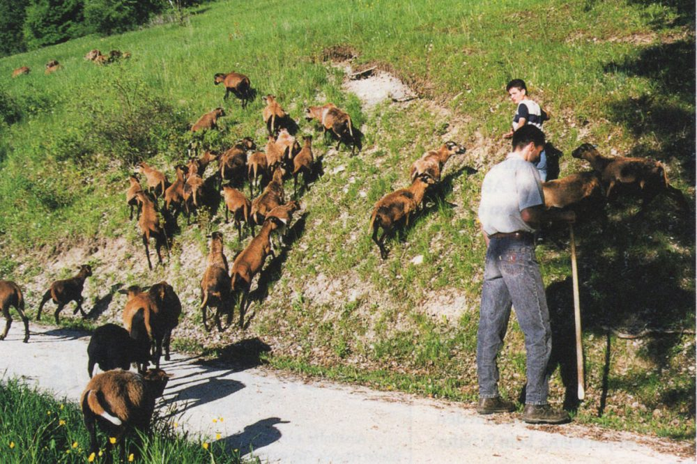 Hirte mit Herde an einer steilen Böschung