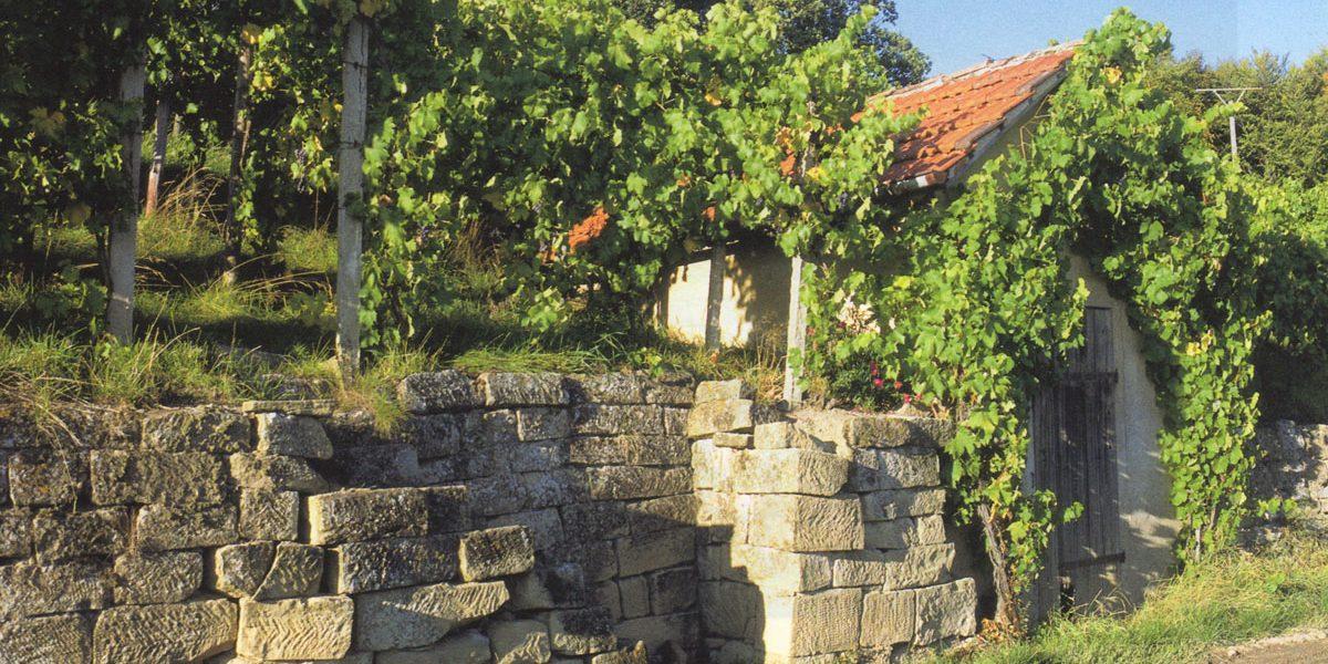 Weinberg mit Mauern und einem Häuschen