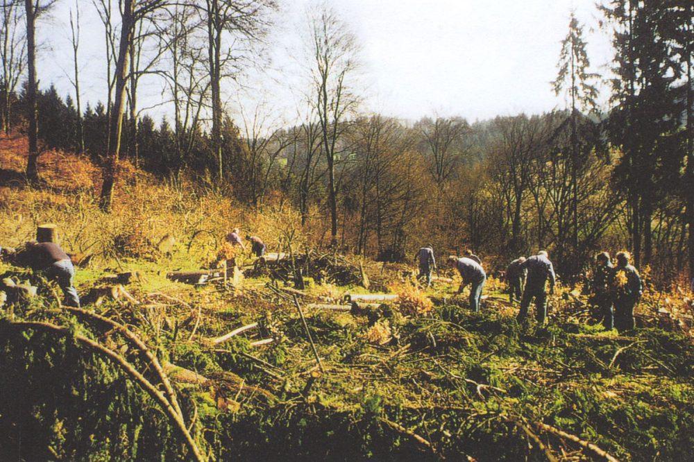 Menschen beseitigen Äste in einem Wald