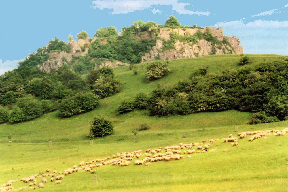 Schafherde vor einem Berg