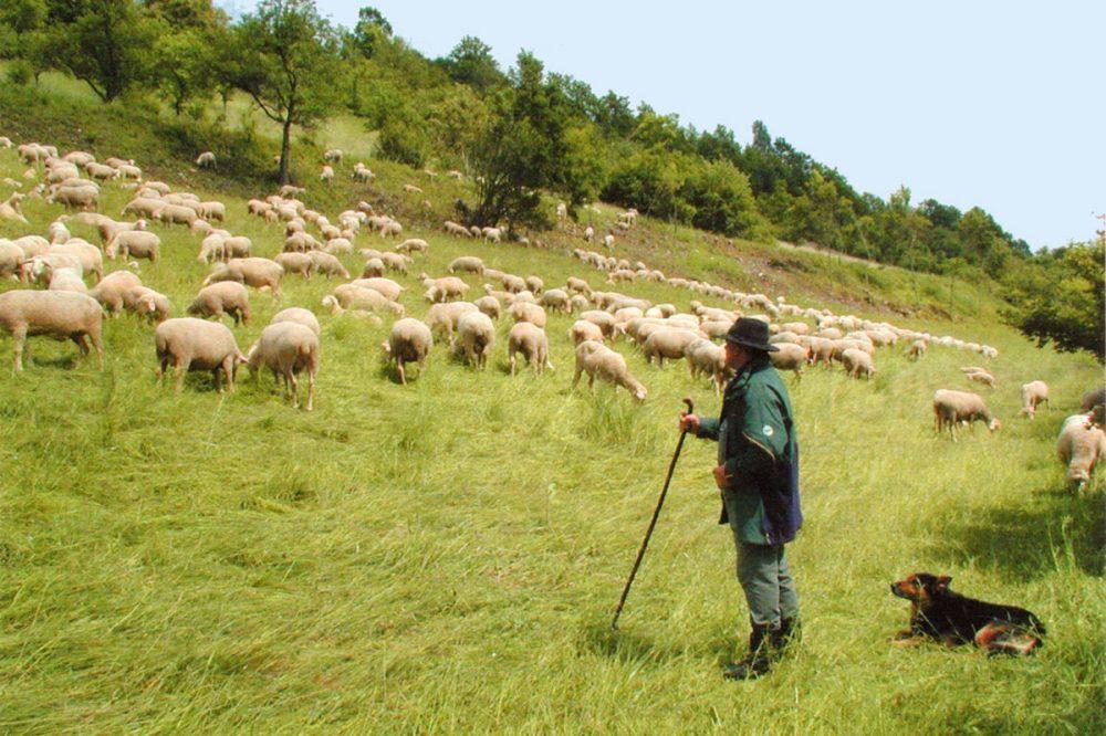 Schäfer mit Hund und Herde an einer steilen Wiese