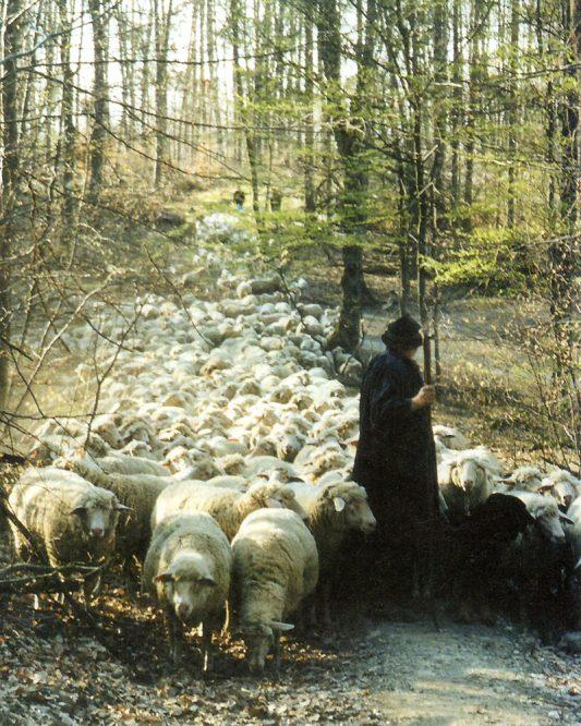 Schäfer mit Herde im Wald