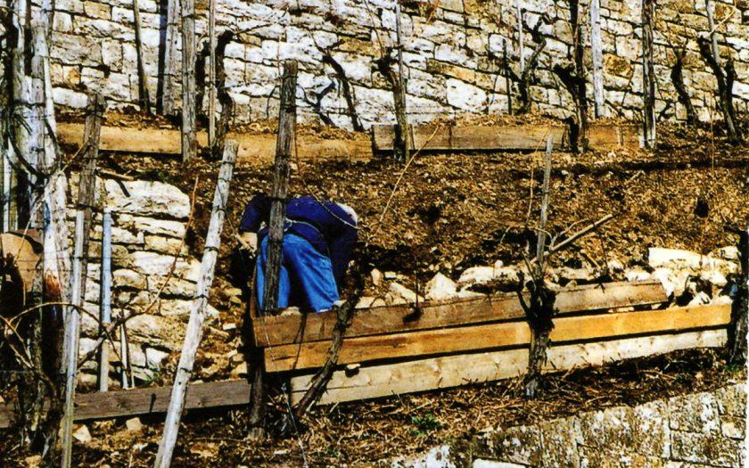 eine Person repariert eine Mauer in einem Weinberg