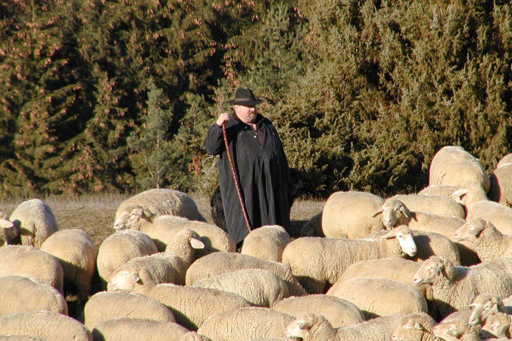 Schäfer bei seiner Herde