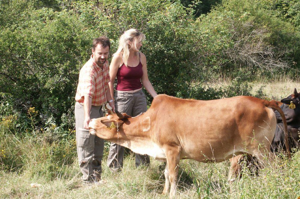 Frau und Mann mit einer Kuh