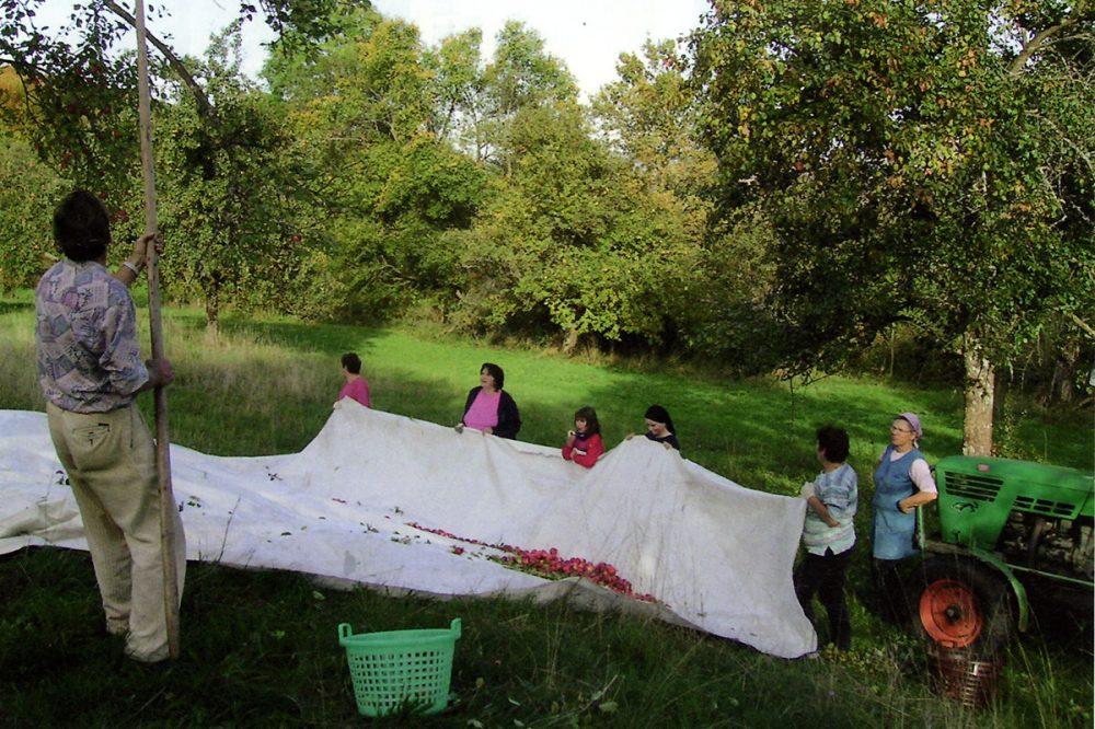 Menschen sammeln Äpfel auf einer Wiese ein