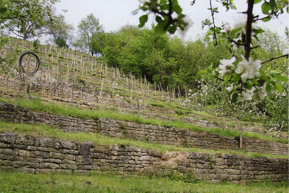 Terrassenweinberg mit sanierten Mauern