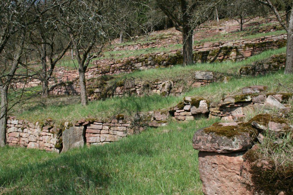 ehemalige Weinbergmauern