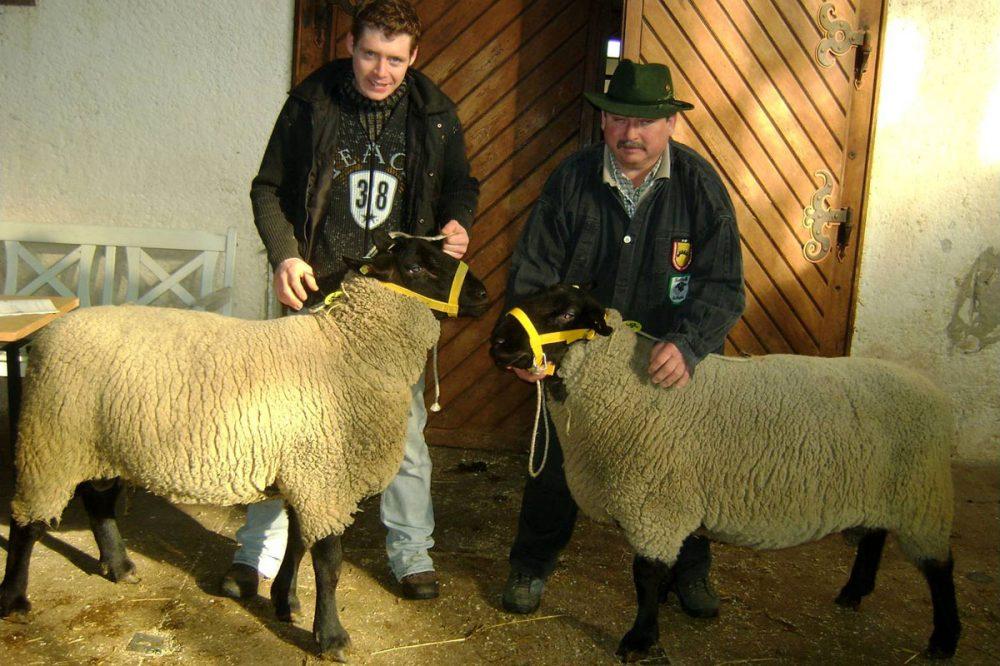 zwei Schäfer und zwei Schafe