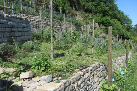Steillagen in einem Weinberg