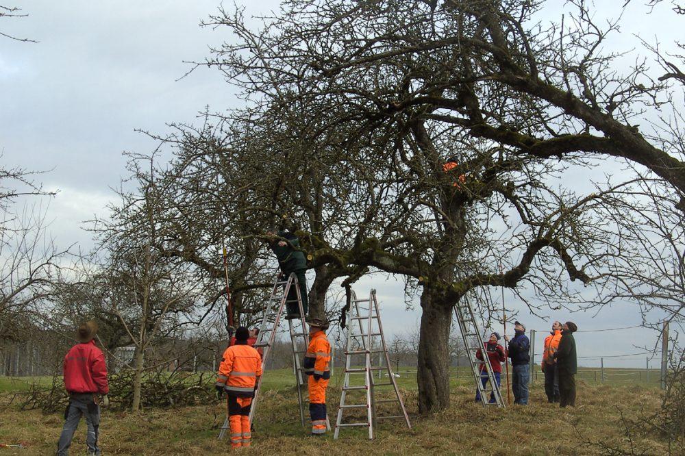 Menschen unter eine hohen Apfelbaum