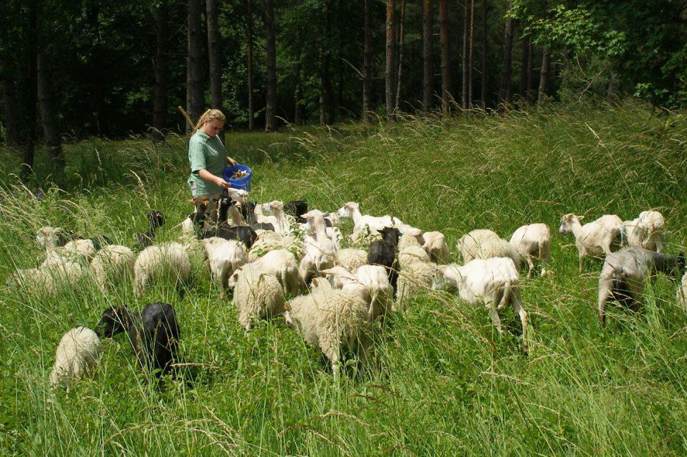 Frau mit einer Schafherde