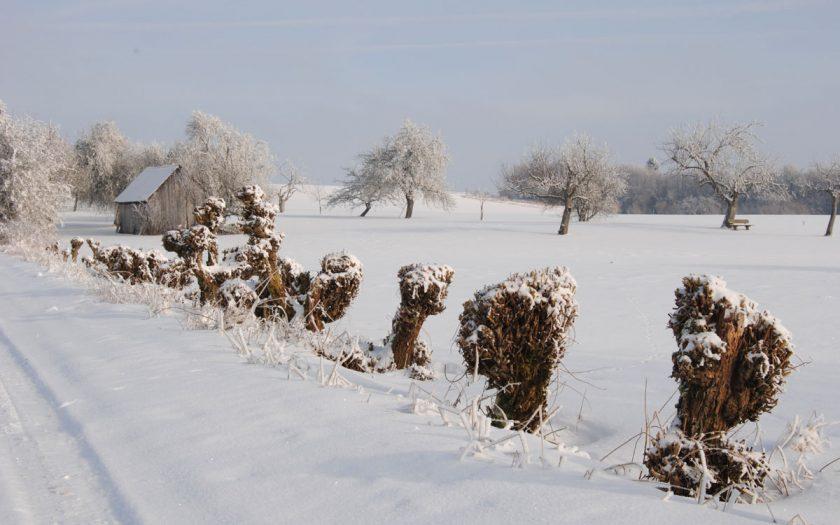 Bäume im Winterkleide