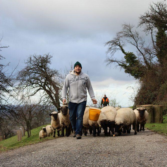 junger Mann mit einer Schafherde