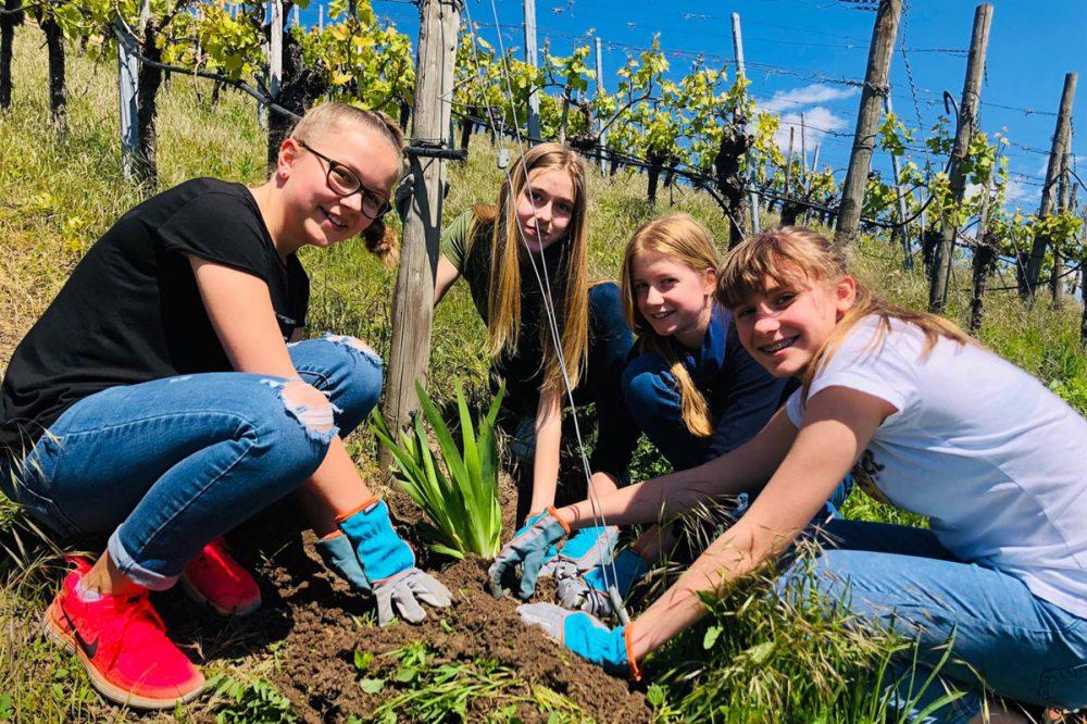 Jugendliche arbeiten im Weinberg