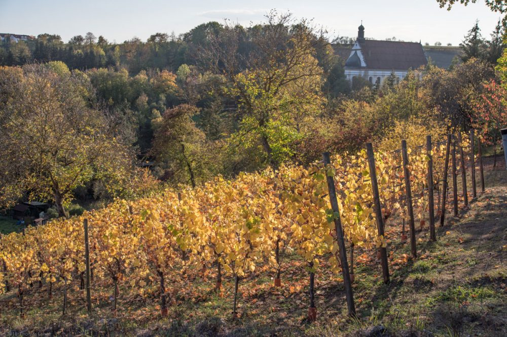 herbstliche Weinberge mit einer Kirche im Hintergrund