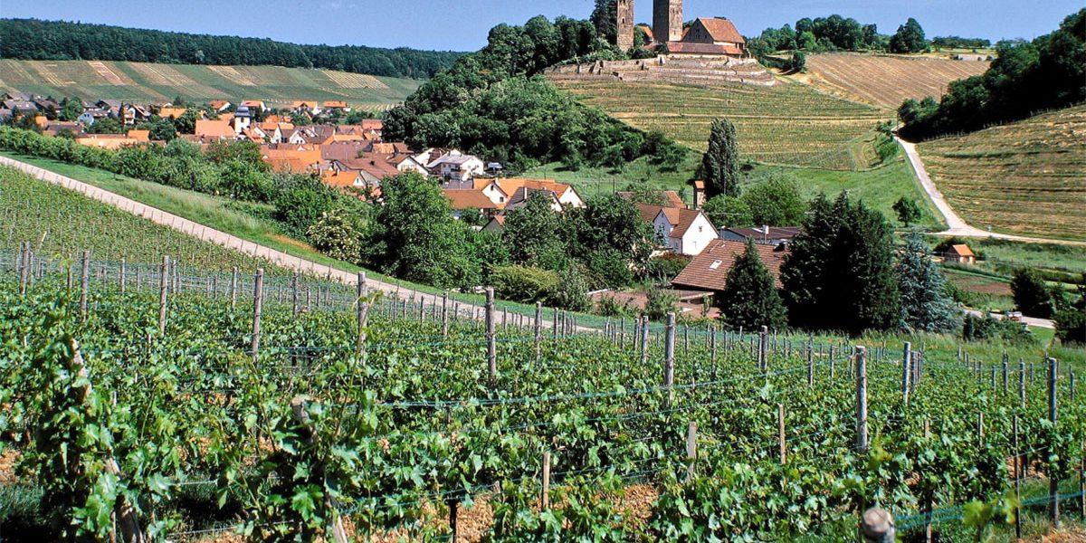 Burg und Weinberge