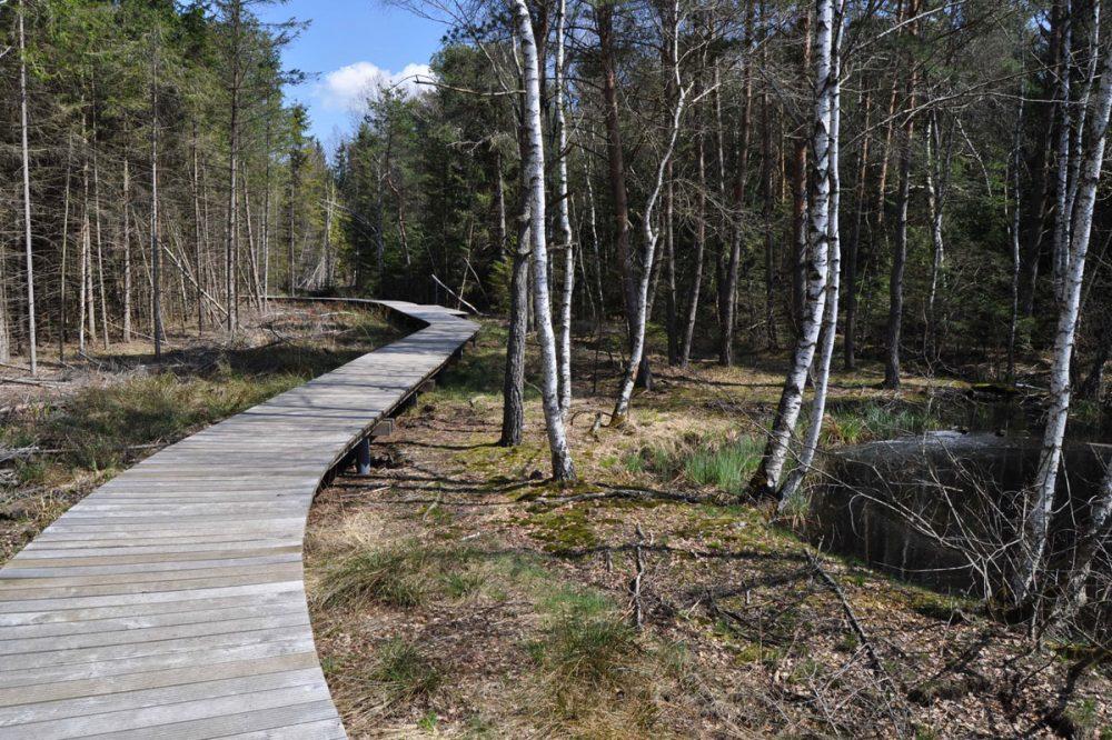 Holzplanken im Wald