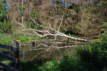 Baum liegt im Wasser