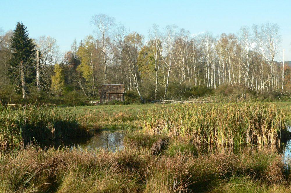 Holzhütte in  einer Moorlandschaft