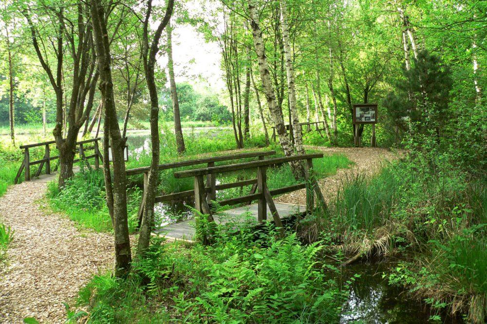 Steg über einen Bach im Wald