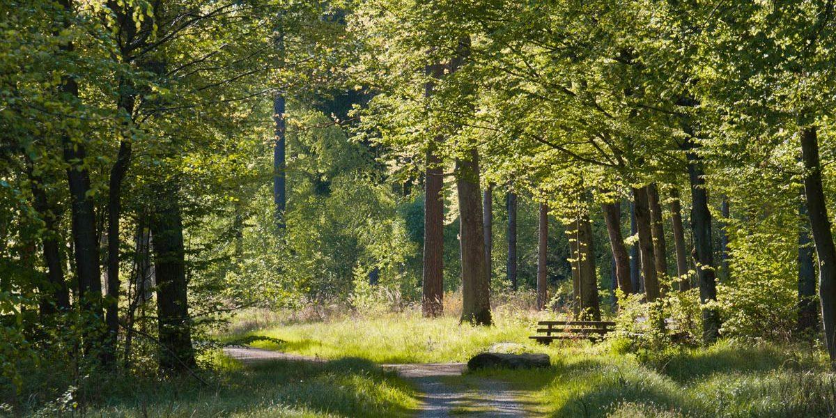 Waldweg mit einer Bank