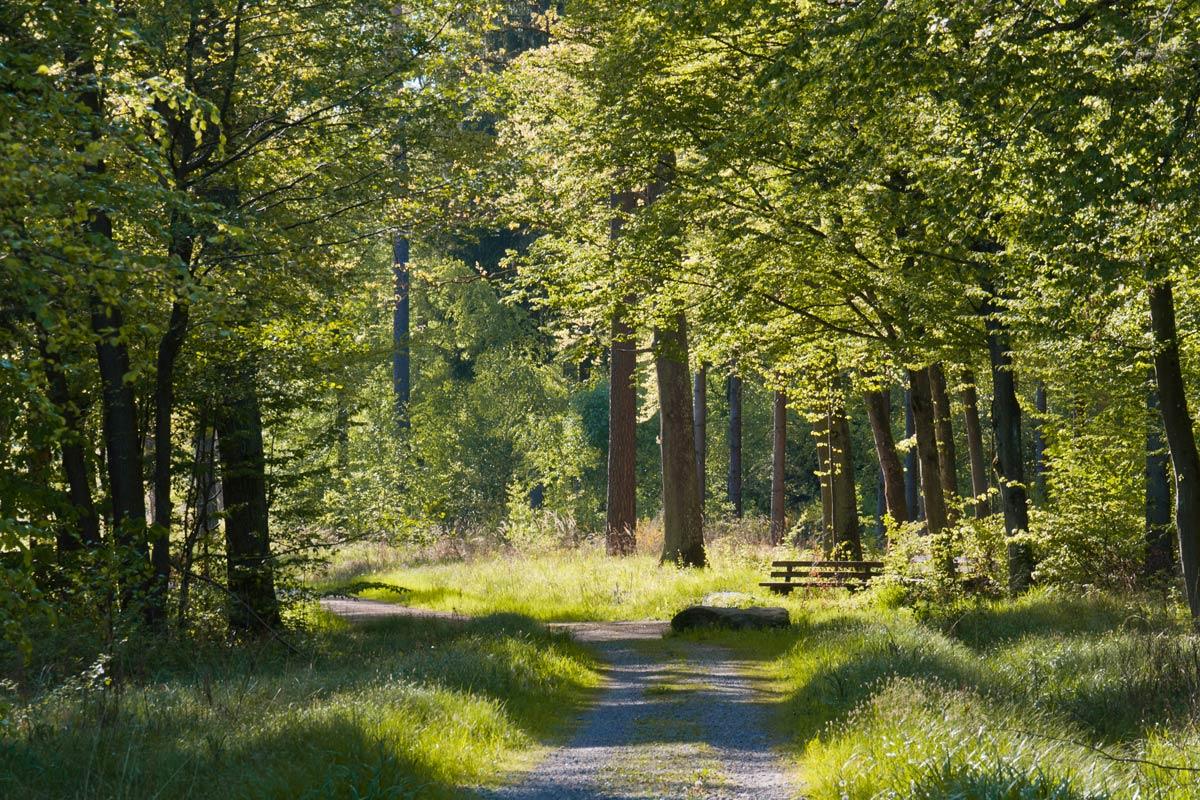 AUSGEBUCHT! Führung im Stuttgarter Wald