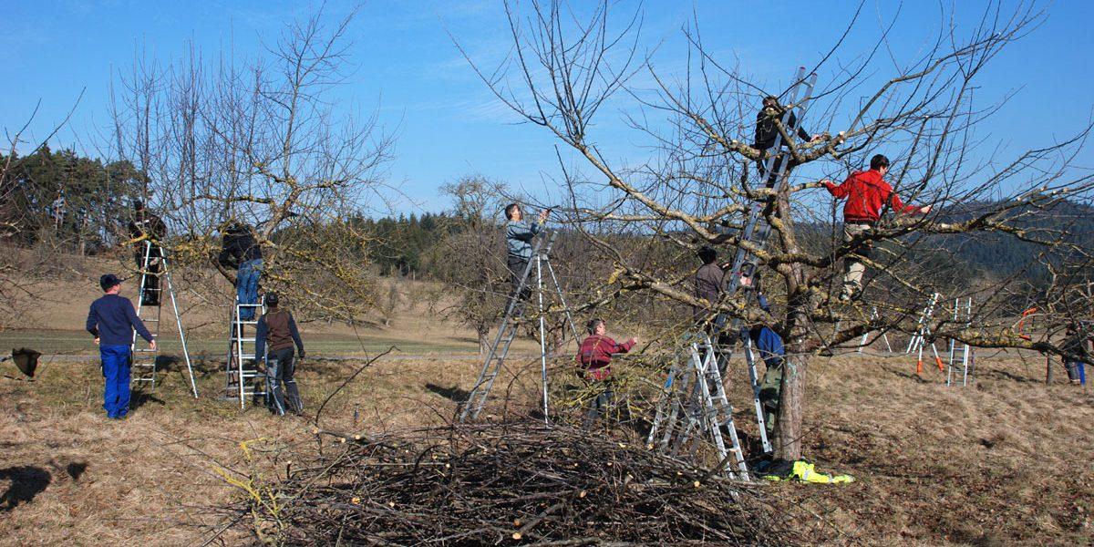 mehrere Menschen klettern auf Bäume