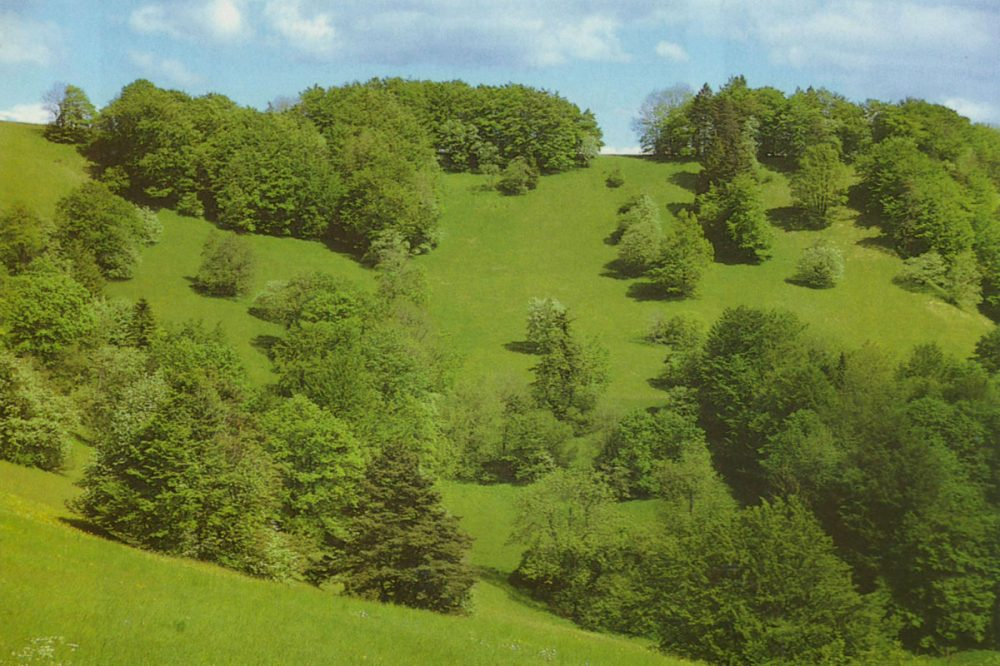 Hang mit Wald und Wiesen