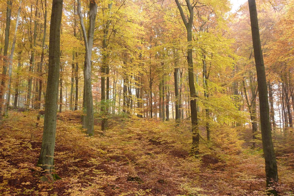 ABGESAGT! Unsere Wälder – Retter fürs Klima, Opfer der Hitze?